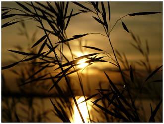 Sundown by WinterSnowfall23
