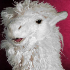 RufusReginald's Profile Picture
