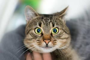 Stock - Cat by wachowicz