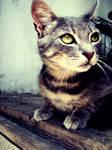 The Cat by ArtNeima