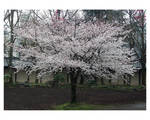 Fragile Spring