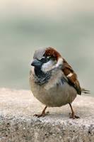 Bird by Decagon