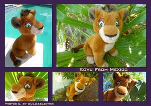 Kovu From Mexico