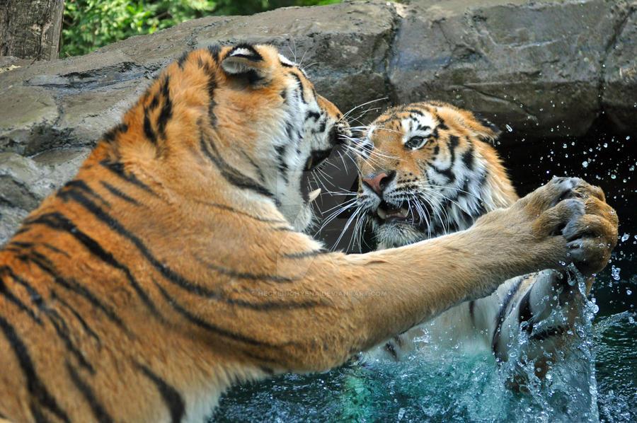 Tiger Waltz by HecklingHyena