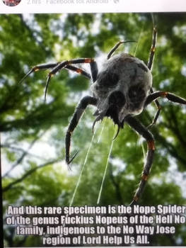 I Believe This is An Actual Spider