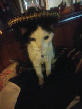 Fiesta Kitty!
