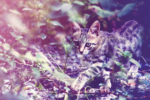 Lonely Kitty by mfu1986