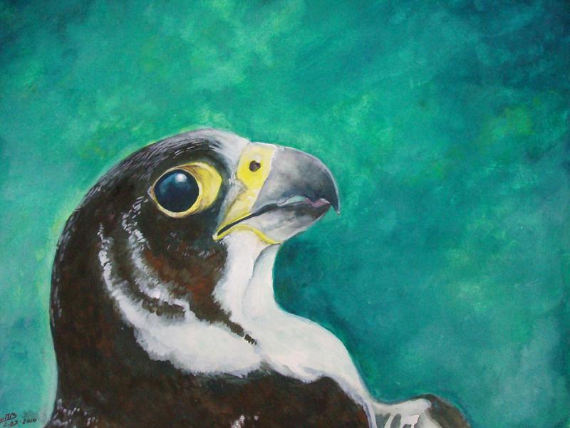 Peregrine Falcon Sketch Peregrine Falcon Color Sketch