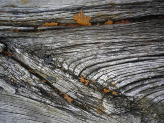 Wooden Board 02 by VLFBERHT
