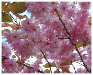 Pink by kiaraneko