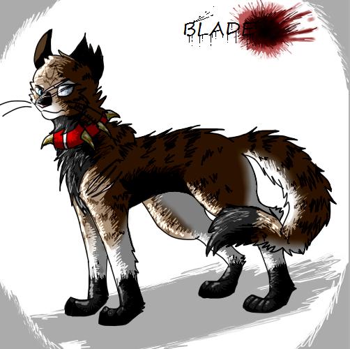 Sol Warrior Cats Headshot