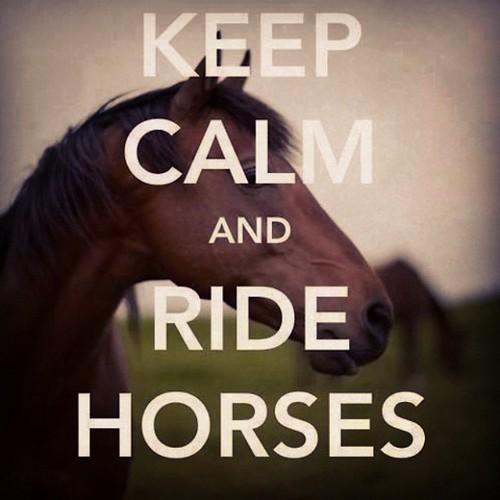 Los caballos keep calm...