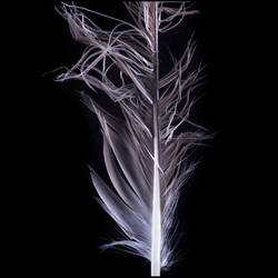 Feather 3681 by JOEMILIEN