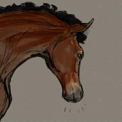 Sketch foal