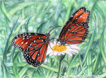 Butterflies on a Daisy by esayelemay