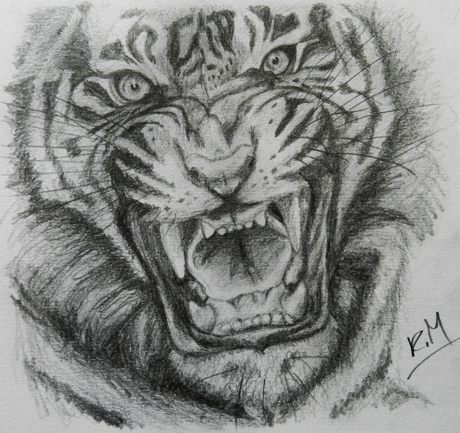 This is an image of Persnickety Roaring Tiger Drawing