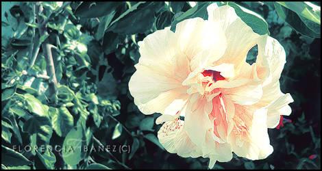 Kalafina by SheSpider3