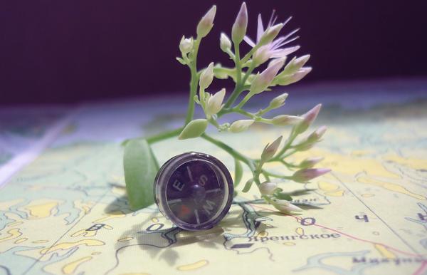 Tiny little compas by RaMila