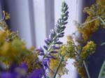 Summer plant by RaMila