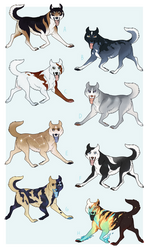 Lowered prices! Basic Spitz Adopts | CLOSED