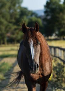 aka-horse-stock's Profile Picture