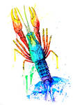 Rainbow Lobster