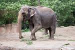 Elephant Stock by beks8385