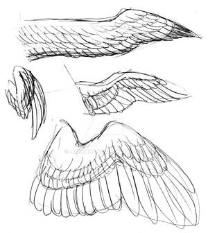Wing References 02