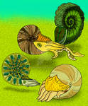 Triassic Nevadan Ammonites