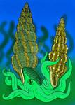 Tridenticeras species