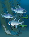 Culmacanthus species