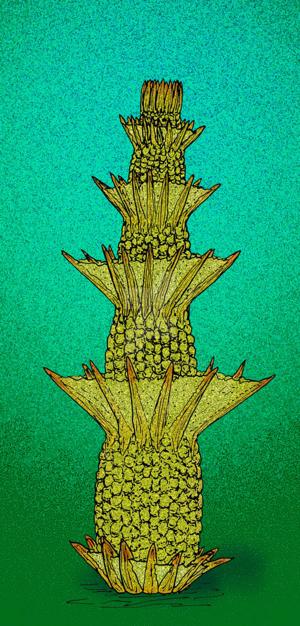 Yukonensis yukonensis by avancna