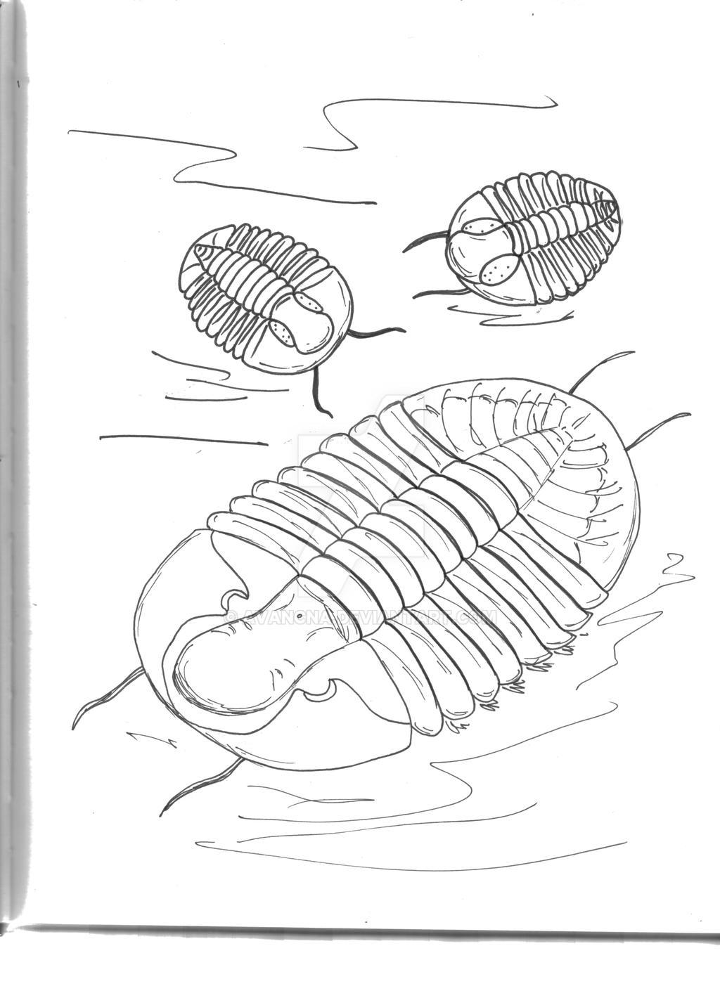 Librum Archaeus 100 by avancna