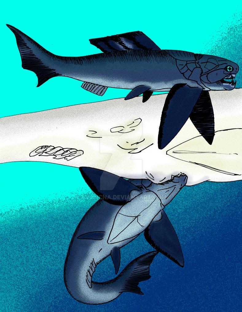 Dinichthys herzeri by avancna