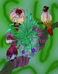 Cardiolophas species