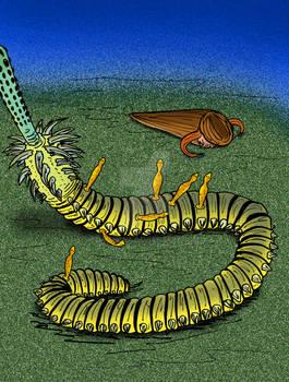 Inquicus fellatus