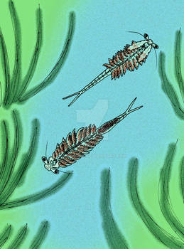 Dexteria floridana