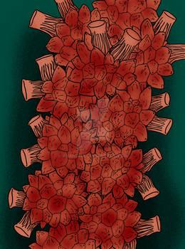 Halocynthia roretzi