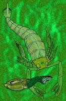 Slimonia acuminata by avancna
