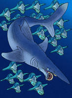 Helicoprion bessonovi v1 by avancna