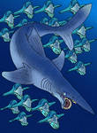 Helicoprion bessonovi v1