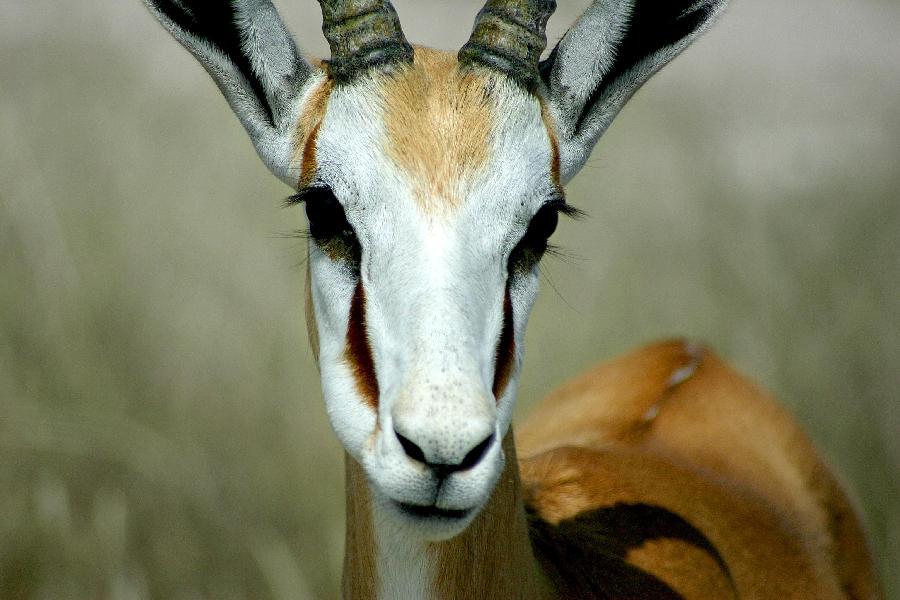 Springbok - Namibia by kyleusher