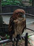 An owl by Scarletcat1