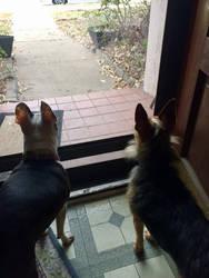 On patrol! by Scarletcat1