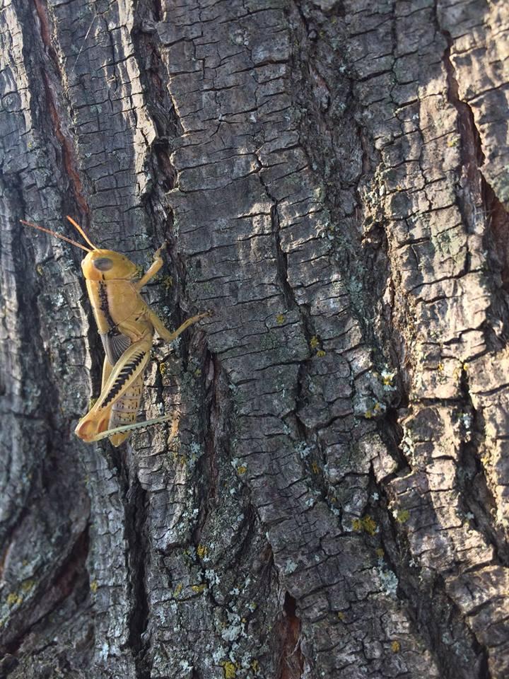 On A Tree by Scarletcat1