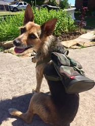 Herbie's Camo Backpack