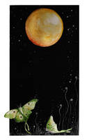 aripi de luna - zimleea by childrensillustrator