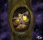 Owl at rain- timwell