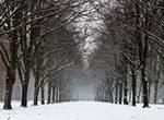 Winter Wonderland Stock
