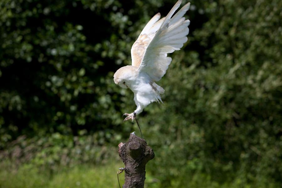 Bird Stock 9 by Kassmir